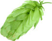 ingenious-brewing-company-humble-texas-home-humble-galaxy-hops-2