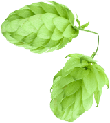 ingenious-brewing-company-humble-texas-home-humble-galaxy-hops-6